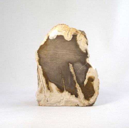 Versteinertes Holz Anschliff