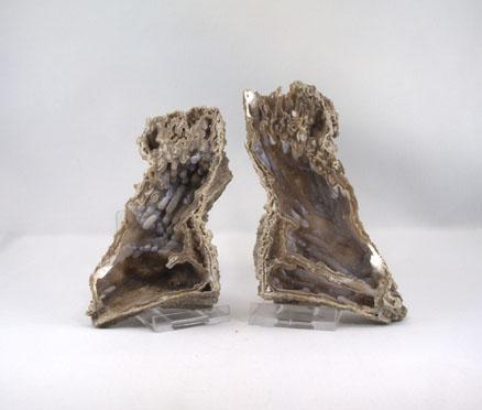Koralle versteinert Paar