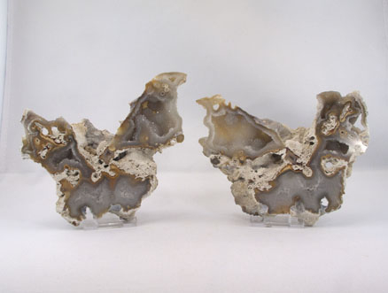 Unikat Koralle versteinert Paar